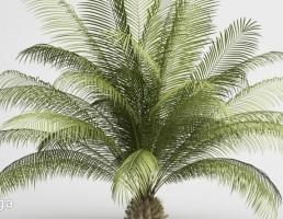 درختچه گرمسیری