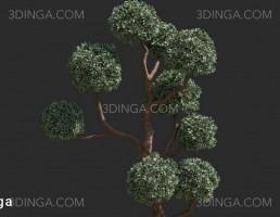 مدل درختچه باغی