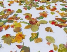 برگریز پاییزی