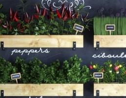 گلدان و گیاهان طبیعی آشپزخانه