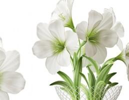 گلدان + گل ختمی