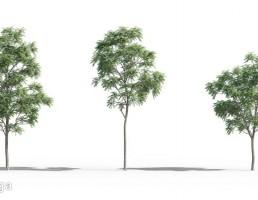 درختان سرسبز