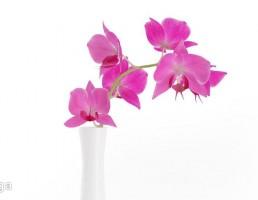 گلدان + گل نیلوفر