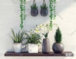 گلدان + گیاهان طبیعی و آویز