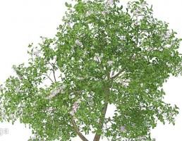 شکوفه درختان