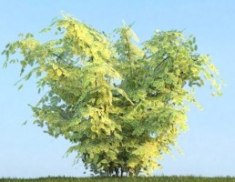 درخت Shrubs