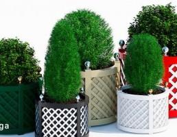 گلدان +گیاهان خانگی