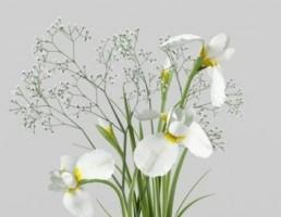 گلدان + گل زنبق