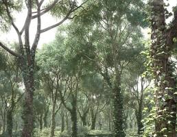 صحنه داخلی جنگل