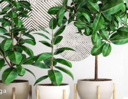 گلدان + گیاهان خانگی