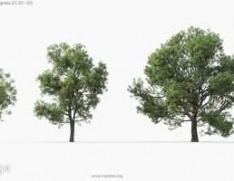 درختان باغی