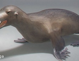 فک (پستاندار دریایی)