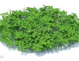 چمن + گیاهان وحشی