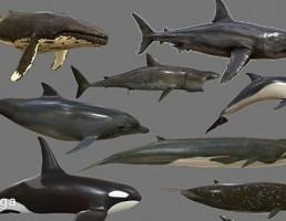 مجموعه حیوانات دریایی