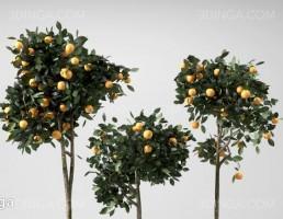 گلدان + درختچه پرتقال