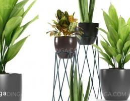 گلدان + گیاهان طبیعی