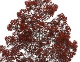 درخت با برگهای قرمز