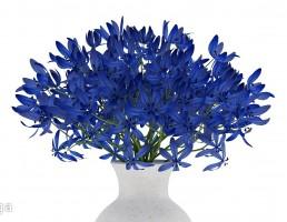 گلدان  + گل آبی