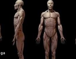 آناتومی بدن مرد