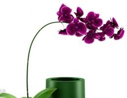 گلدان + گل آپارتمانی