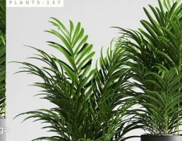 گلدان + گیاهان داخلی