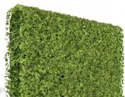 دیواری پوشیده از گیاه