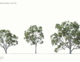 انواع درختان بهاری