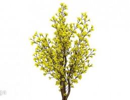 درختچه باغی بهاری
