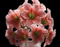 گلدان + گل لیلوم