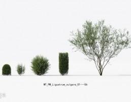 درختان بهاری