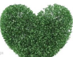 بوته به شکل قلب