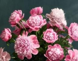 گلدان + گل داودی