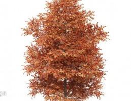 درخت پاییزی توسکا