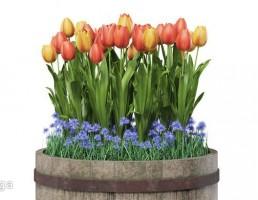 بشکه چوبی + گل لاله