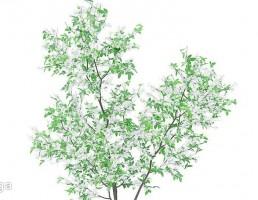 شکوفه درخت پرتغال