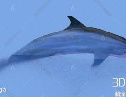 مدل سه بعدی دلفین