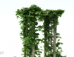 آلاچیق چوبی باغ