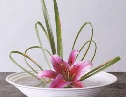 کاسه+ گل زنبق