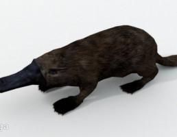 platypus (پلاستیک)
