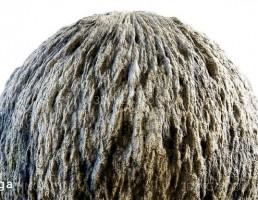 تکسچر پوست درخت