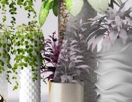 گلدان و گیاهان طبیعی