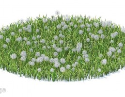 چمن + گیاهان کوچک