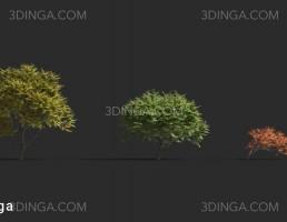 انواع درختان باغی