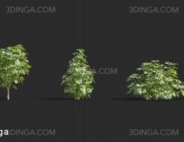 انواع درختچه های باغی