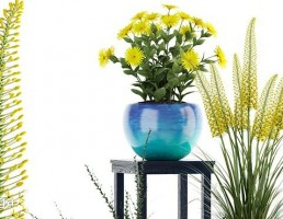 گلدان + گل بابونه
