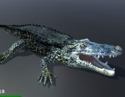 تمساح آبی