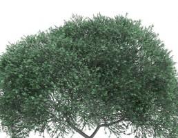 درخت خودرو