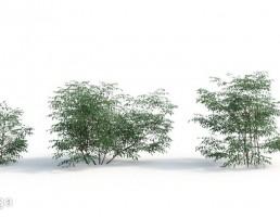 بوته گیاهان طبیعی