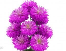 گلدان  + گل بنفش