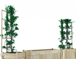گلدان + بوته های باغ